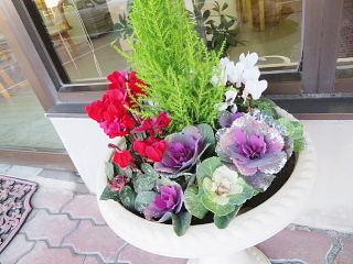 出入口前のお花、きらきらしてます!